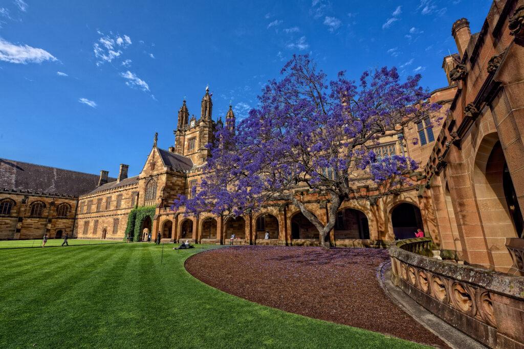 The University of Sydney Quadrangle, featuring green grass and purple Jacaranda tree